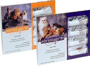 Bayer advantage 40 : 4 pipettes antipuce pour chat et lapin - de 4kg